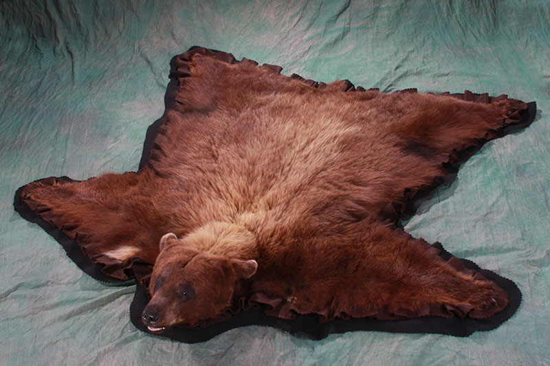 Color Phase Black Bear Rug