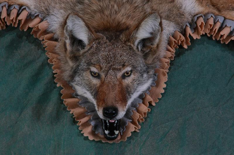 Attractive Coyote Rug