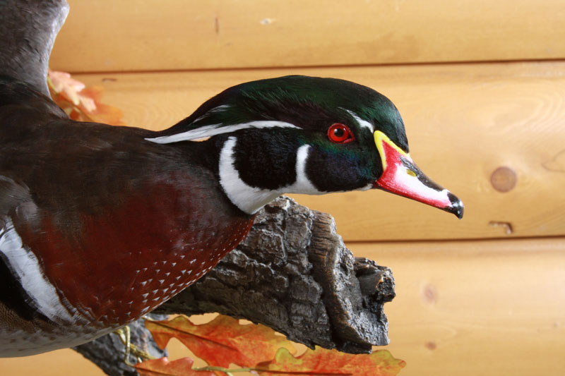 All American Taxidermy Gallery